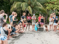 Volunteer Sea Turtles opportunities in Costa Rica Conservation Program