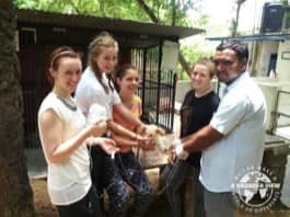 Review Ella Briscoe Volunteer in India Jaipur at the Animal Shelter program