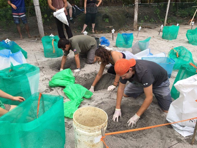 Review Devon Coulter Volunteer in Costa Rica Sea Turtle Conservation Program