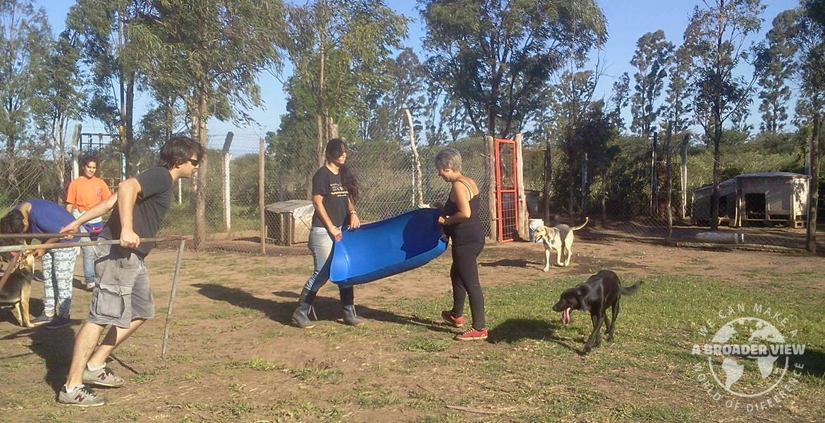 Volunteer in Argentina Animal Rescue Center – Dog Shelter