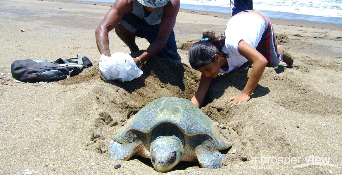 Volunteer in Costa Rica: Sea Turtle Internship