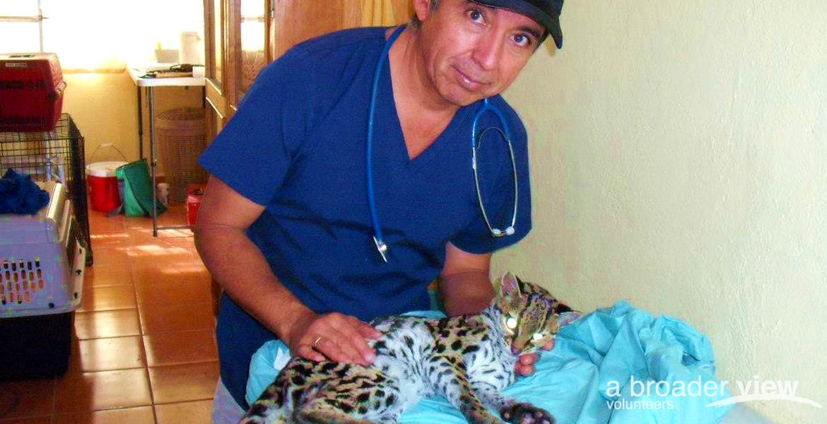 Volunteer in Guatemala: Conservation / Animal Rescue Veterinary